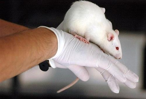 Scientists work mice brains by remote control